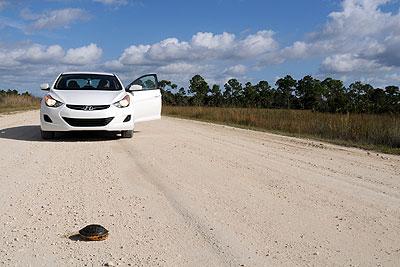 Ma voiture arrêtée par une tortue dans les Glades
